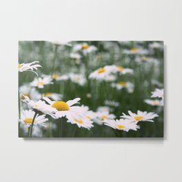 Maybe Daisies. Metal Print