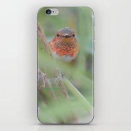 An Allen's Hummingbird Amid Mexican Sage iPhone Skin