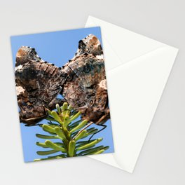 Red Admiral Butterflies Mating Stationery Cards