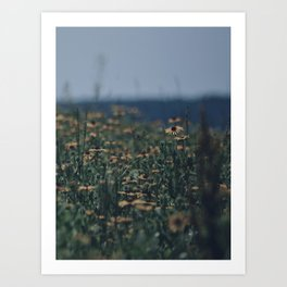 Wildflowers By The Lake Art Print