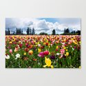 Tulips // Field by thomaslawn