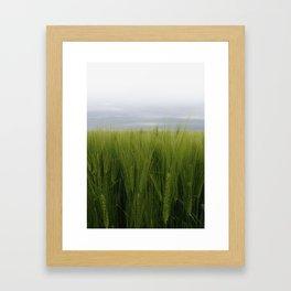 Grainfield Framed Art Print