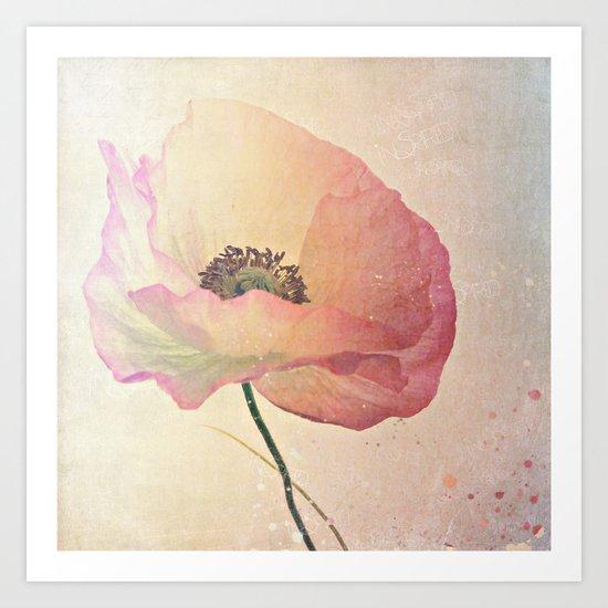 Inspired by the light -- Pink Poppy Flower Art Print
