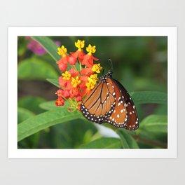 Queen butterfly photo Danaus gilippus Art Print