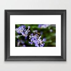 Bee on lavander Framed Art Print