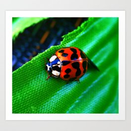 Ladybug on Leave Art Print