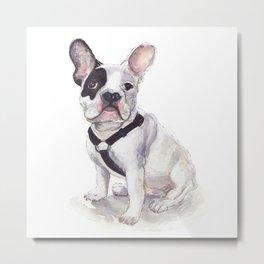 Humphrey the French Bulldog Metal Print