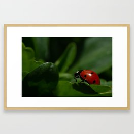 Ladybug from an Insect's Perspective Framed Art Print