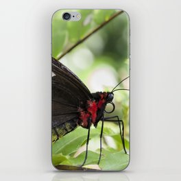 Butterfly Birdwing iPhone Skin