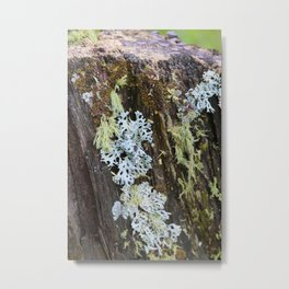 Moss and Fungi on a Forest Tree Metal Print