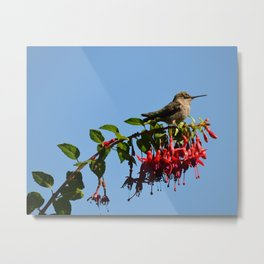 out on a limb Metal Print