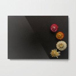 Strawflowers Mockup Metal Print