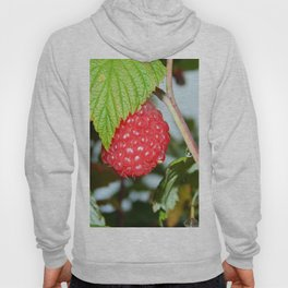 Single Red Raspberry After the Rain Hoody