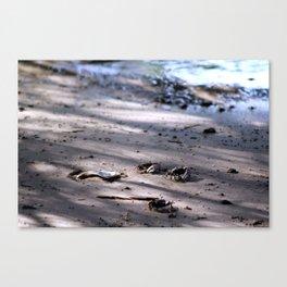 Tiny Crabs on the Beach Canvas Print