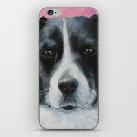 border collie iPhone & iPod Skins featuring Border Collie by paintintheneck