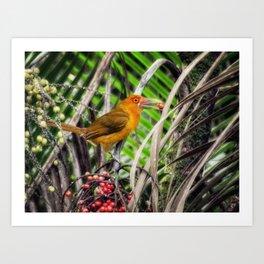 Acari-banana - fauna & flora line Art Print