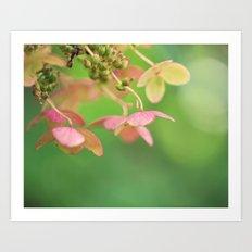 Pink Hydrangea II Art Print
