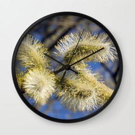 WILLOW CATKINS  Wall Clock
