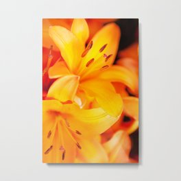 Polleny Metal Print