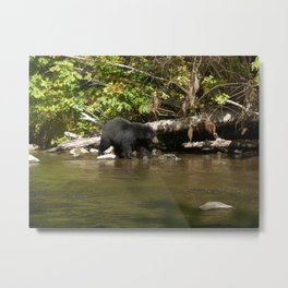 The Salmon Whisperer - A Hunting Black Bear Metal Print
