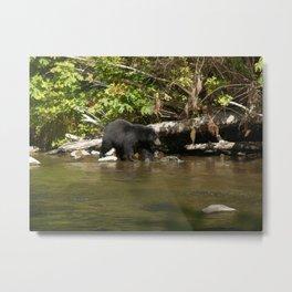 The Salmon Whisperer - A Hunting Black Bear Metal Print