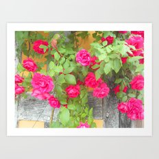 Tudor Rose Art Print