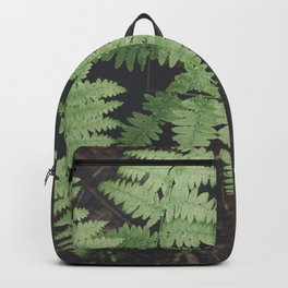 John Muir Fern, Yosemite Backpack