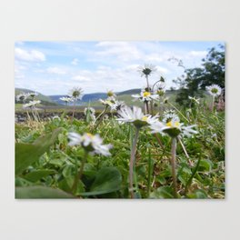 Hide Amongst the Daisies Canvas Print