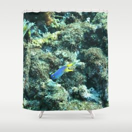 Blue ribbon eel Shower Curtain