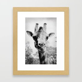 Giraffe Framed Art Print