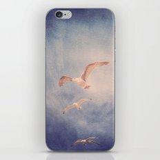 brighton seagulls 2 iPhone & iPod Skin