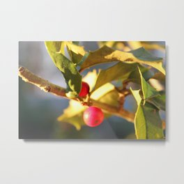 Gold Tipped Holly Metal Print