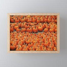 More than a peck of pumpkins at Peck's Produce Farm Market! Framed Mini Art Print