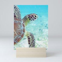 Watercolor Turtle, Green Turtle 17, St John, USVI Mini Art Print