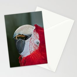 Red and Green  Macaw Stationery Cards
