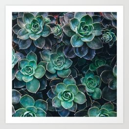 Succulent Blue Green Plants Art Print