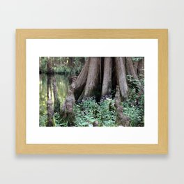 Cypress Knees and Purple Wildflowers Framed Art Print