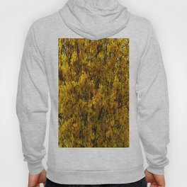Northern Golden Forsythia Hoody