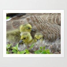 goslings II Art Print