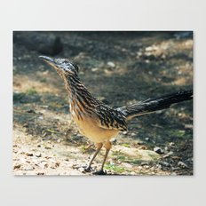 Eying Higher Ground Canvas Print