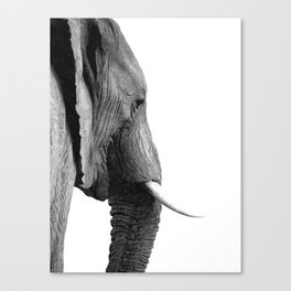 Black and white elephant portrait Canvas Print