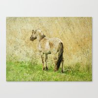 pony Canvas Prints featuring pony by URS|foto+art