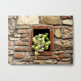 Plant in the Wall Metal Print