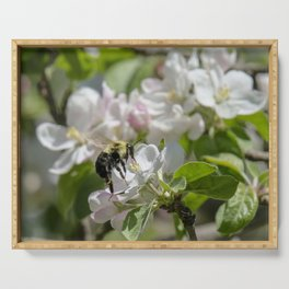 Thinking of apple blossom time Serving Tray