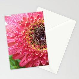 Dewey Barberton Daisy Stationery Cards