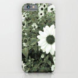 Analog Sunflowers iPhone Case