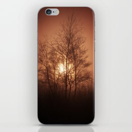 Sunset Behind Grove Of Trees iPhone Skin