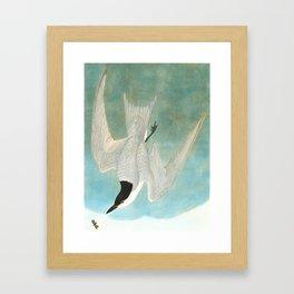 Marsh Tern Framed Art Print