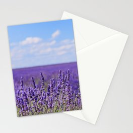 Lavender blooming flowers. Provence Stationery Cards