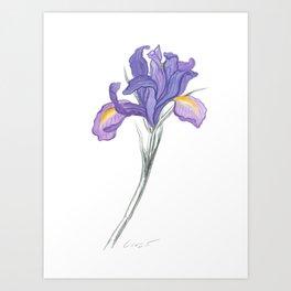 Iris 03 Botanical Flower * Lavender Purple Dutch Iris Art Print